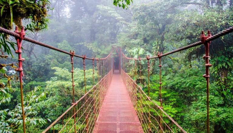 Erkunden Sie den Regenwald von Costa Rica - Hier Monterverde.
