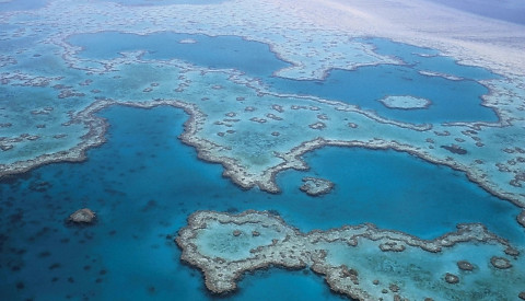 great-barrier-reef.png